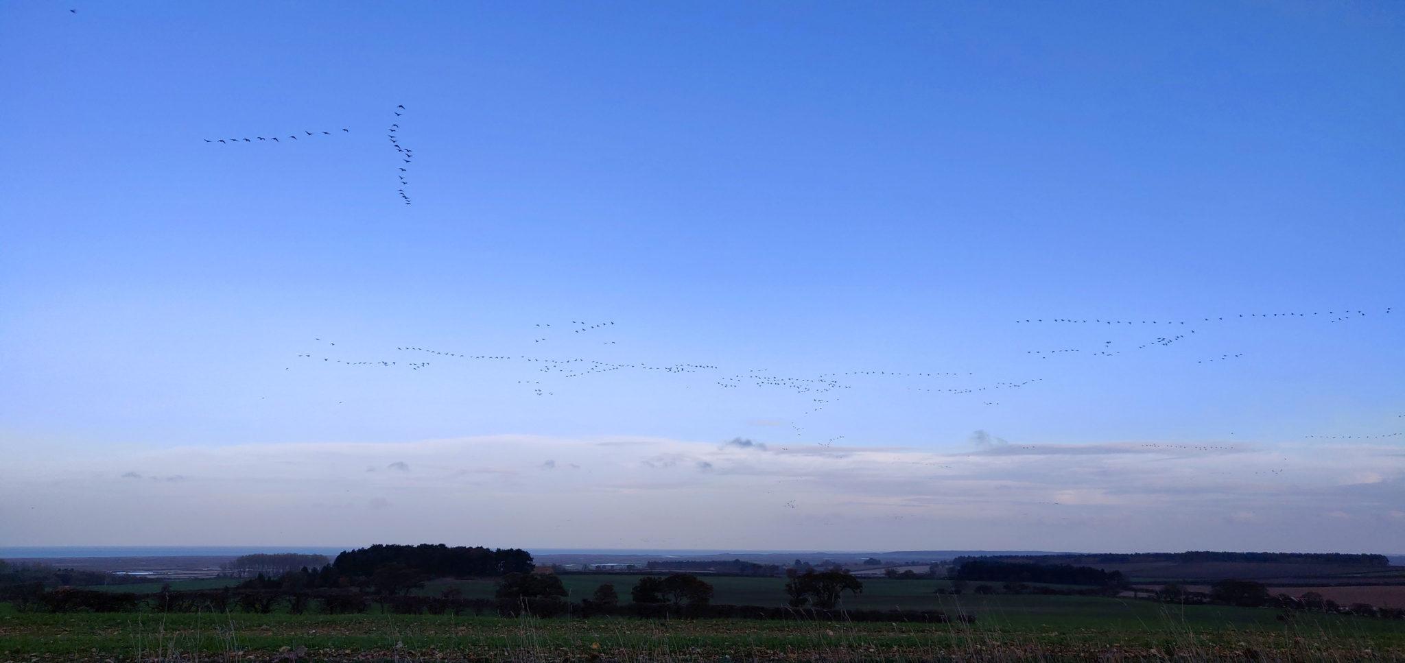Geese fly over Burnham Deepdale